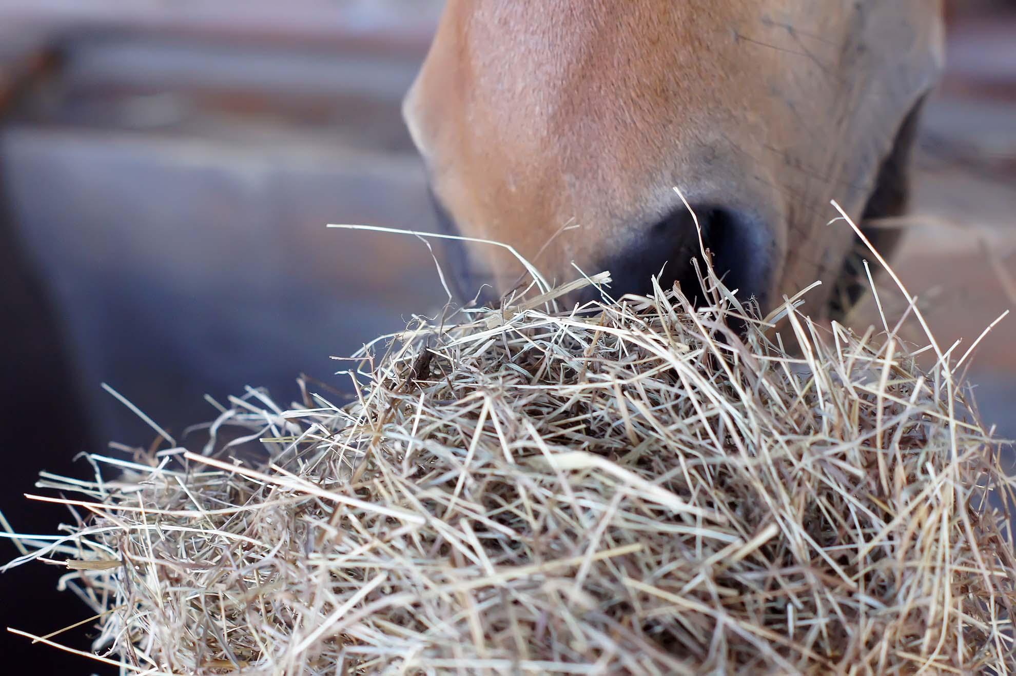 Hoeveel ruwvoer mag een paard en waarom is ruwvoer zo belangrijk?
