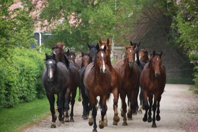 Wat doet vitamine E voor een paard?