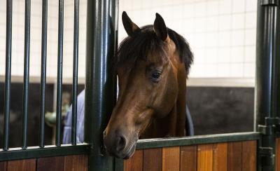 Mijn paard is gevoelig voor suikers. Wat nu?
