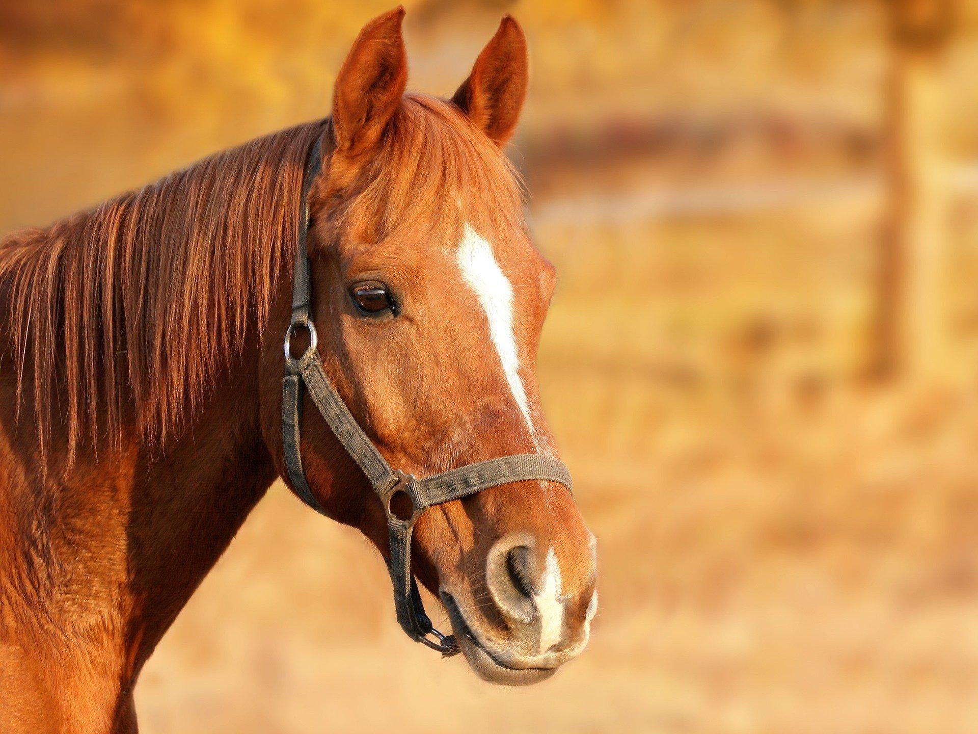 Hoe verminder ik op gezonde wijze het gewicht van mijn paard?
