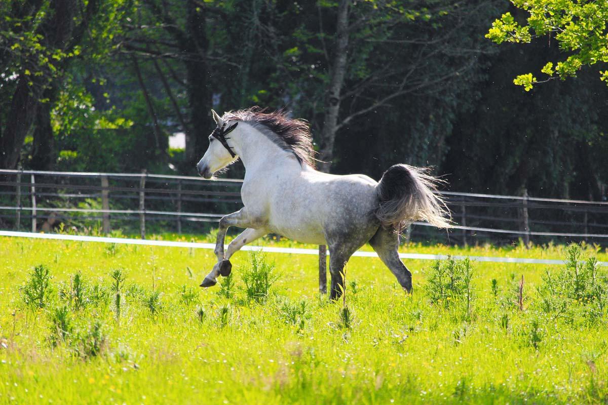 Wanneer heeft een paard een zouttekort?